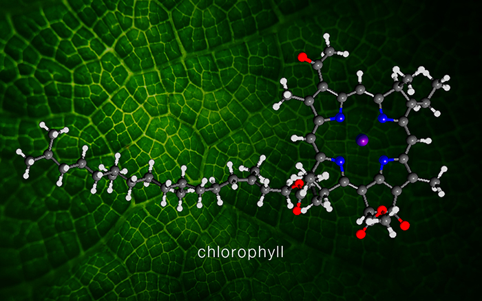 resonant transmutation of magnesium in chrolophyll, Skeleton